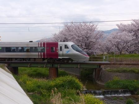 高山川沿いの桜 & JR四国8000系特急電車 1