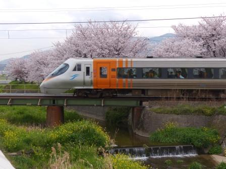 高山川沿いの桜 & JR四国8000系特急電車 2