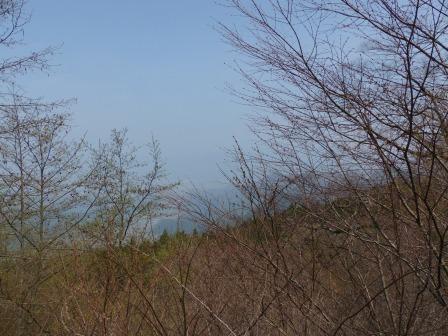 皿ヶ嶺 木々