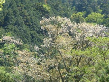 住友の森 フォレスターハウス ヤマザクラ 1