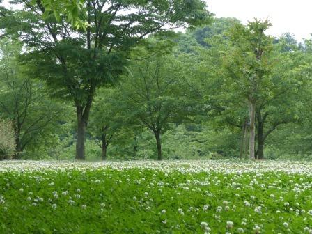 松山総合公園 さくらの丘