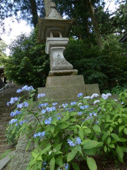 惣河内神社 神社と紫陽花 1