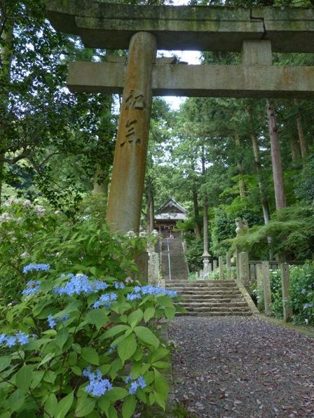 惣河内神社 神社と紫陽花 2