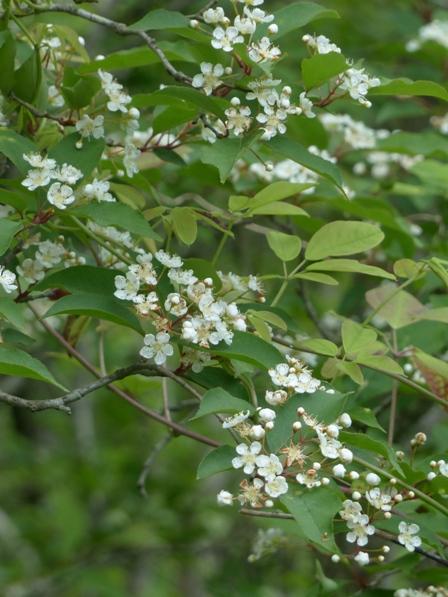 四国カルスト・天狗の森付近 カマツカ