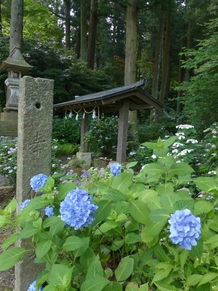惣河内神社 神社と紫陽花 3