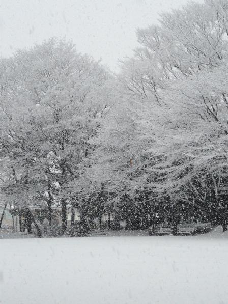 雪景色 4