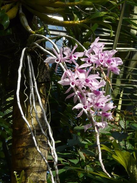 筑波実験植物園 ラン科の花 1