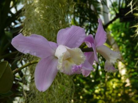 筑波実験植物園 ラン科の花 2