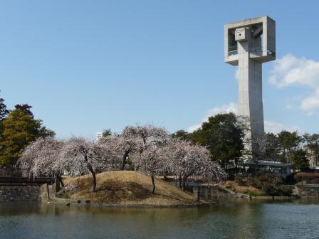 松見公園 枝垂れ梅 8