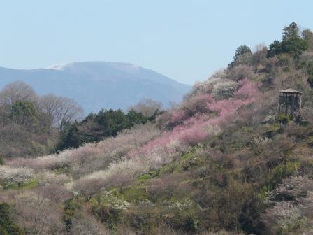 七折梅園 遠景 2