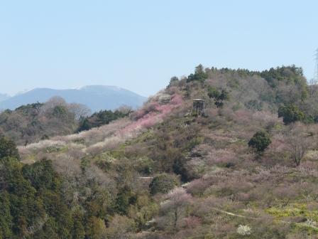 七折梅園 遠景 1