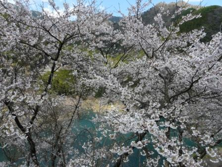 大渡ダム周辺 3