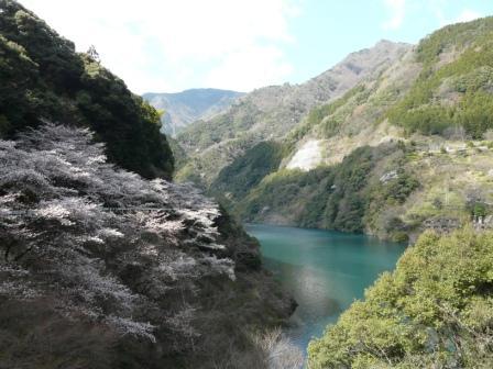 大渡ダム周辺 10