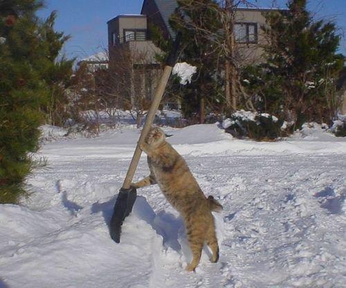 雪かきするニャンコ