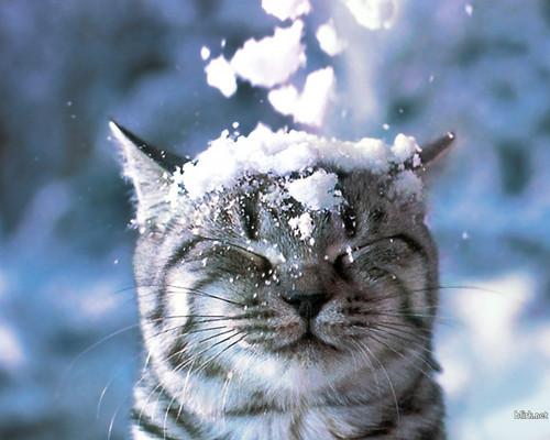 2月17日は沖縄で唯一雪が降った日!