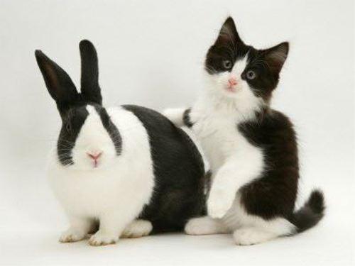 まるで双子のようなそっくりな動物達