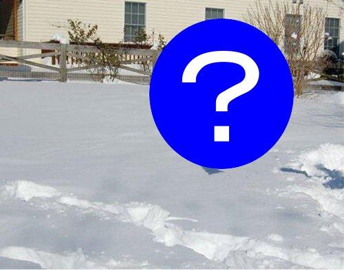雪が楽しすぎてひっくり返っちゃった犬