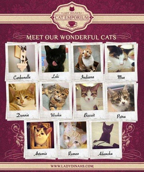 ロンドンで初の猫カフェがオープンしたようです