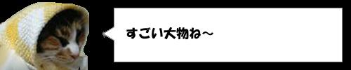 テレフォンショッキングのゲストに安倍晋三総理大臣