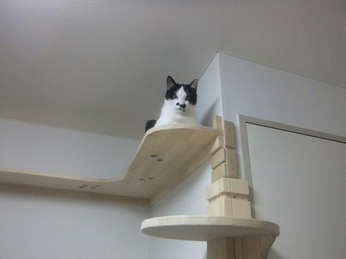 猫付きのマンション