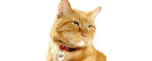 アメリカ大統領選に立候補した猫がいるって本当?