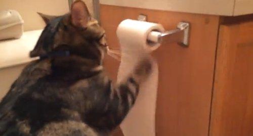後片付けが見事な猫が話題に(動画)