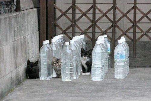 水入りペットボトルの猫避けは全然効かないことが判明