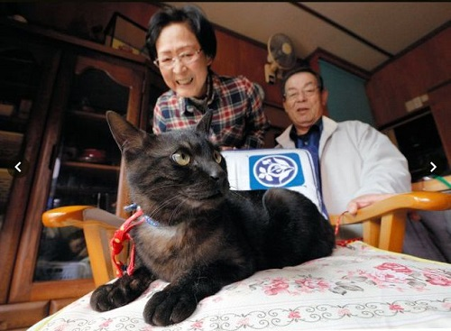 東日本大震災で離れ離れになっていた猫と飼い主が感動の再会