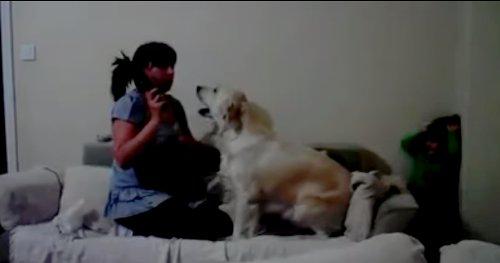 娘を叩こうとする母親を必死で止める犬が話題に