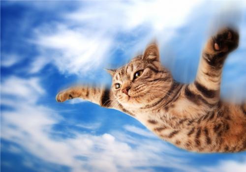 とんでもない高さからコンクリートに落ちて無事だった猫がいる
