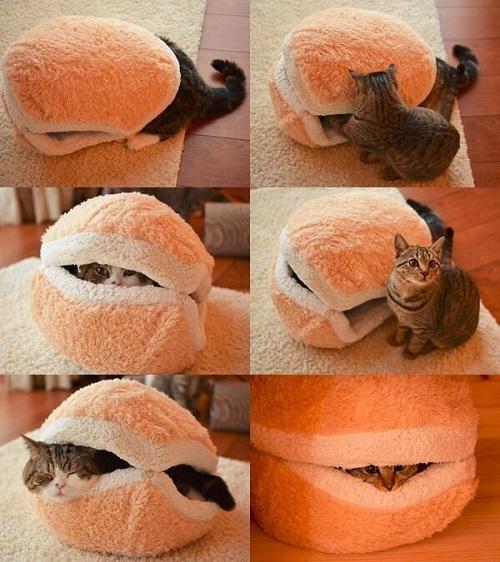 かわいすぎる猫マカロンが話題に・・・?