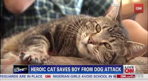 猛犬に襲われる飼い主を救った猫が話題に