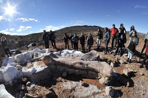 アルゼンチンで世界最大の恐竜の化石が発見される!