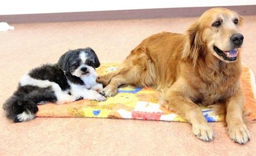 茨城県つくば市に全国最大規模の老犬介護ホームが開設