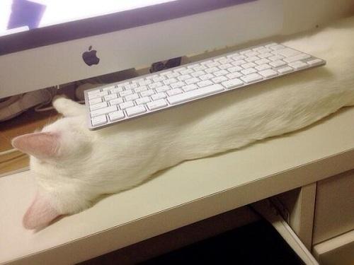 猫の上にキーボード