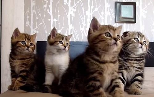 シンクロナイズド・スイミングさながらの動きをする猫が話題に