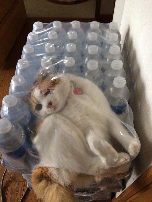 猫がとんでもないところに入っていると話題に・・・