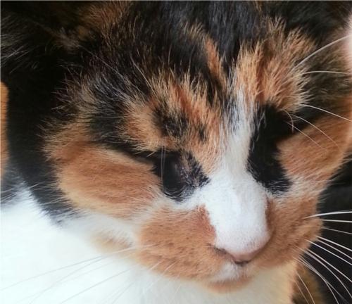 猫を飼うと心臓発作のリスクが低下!?