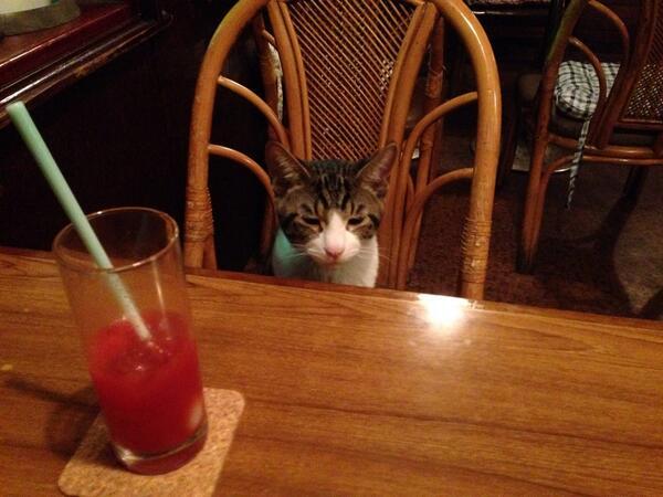 猫カフェならぬ猫居酒屋が話題に!猫酒はいかが?(東京都・江古田)