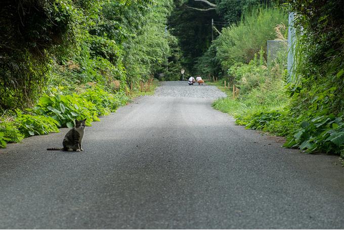 殺処分ゼロへ!環境省が犬猫の殺処分数ゼロへ向けた行動計画を発表!