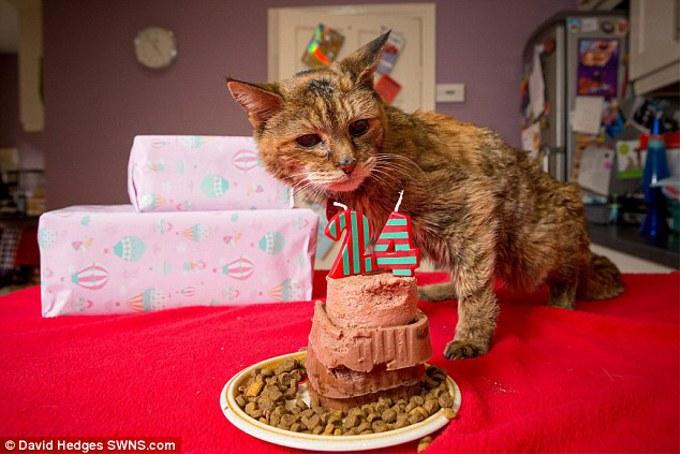 イギリス在住の猫「ポピー」が世界最長寿猫にギネス認定!年齢は24歳