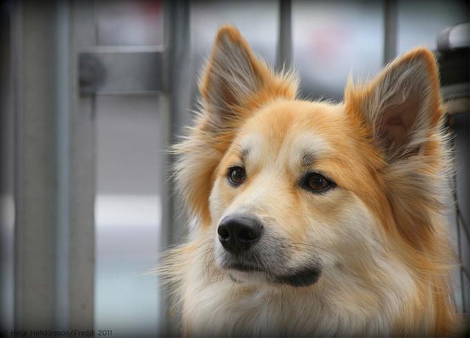 日本で一番人気がある犬種って何?