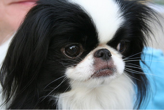 「生類憐みの令」を制定した徳川綱吉が飼っていた犬の数がすごい!