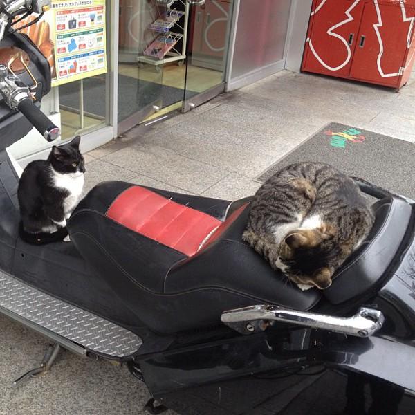 バイクを盗難!?コンビニの前でたむろする猫