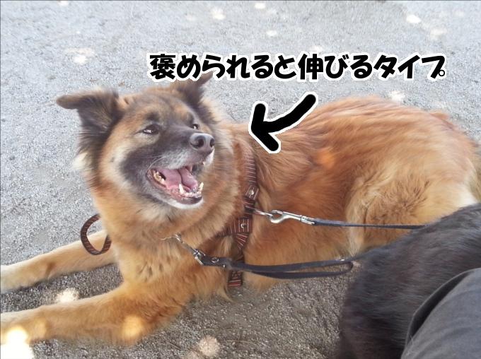 犬を叱る時に名前を呼んではいけない理由