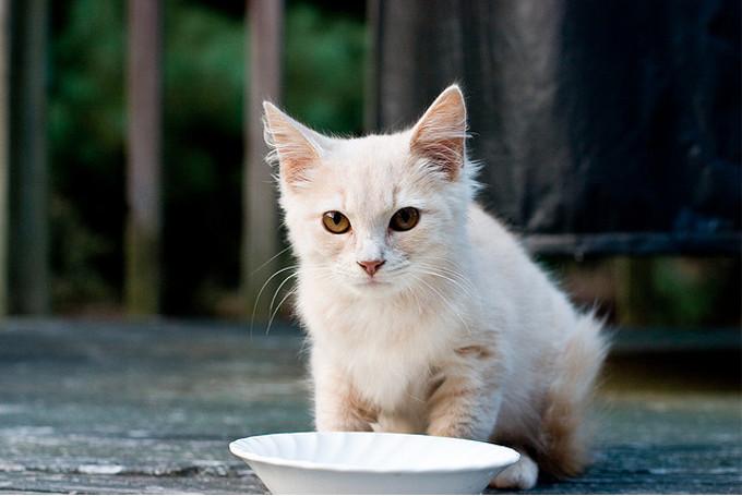 猫の一日の食事量を「制限している?」「制限していない?」。多数派はどっち?