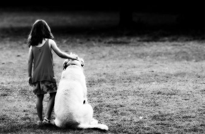 世界で最も飼育されている数が多い犬種とは?
