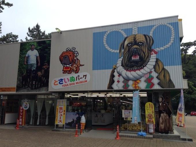 土佐闘犬の一般公開を中止(高知県高知市桂浜)