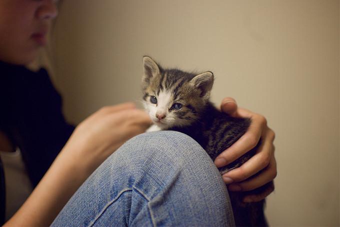 猫が抱っこを嫌がる5つの理由