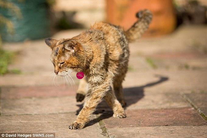 世界最長寿の猫「ポピー」亡くなる